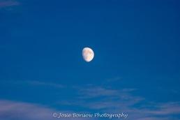 Arctic Moon, Photo by JosieB