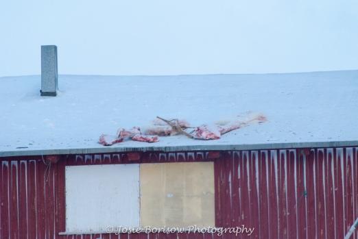 Polar Bear Meat Photo by Josie B
