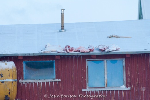 Polar Bear Meat Photo by Josie B