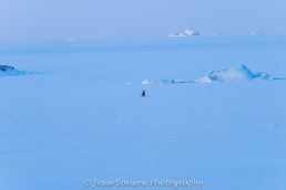 Inuit Hunter on Frozen Bay with Icebergs Photo by Josie B