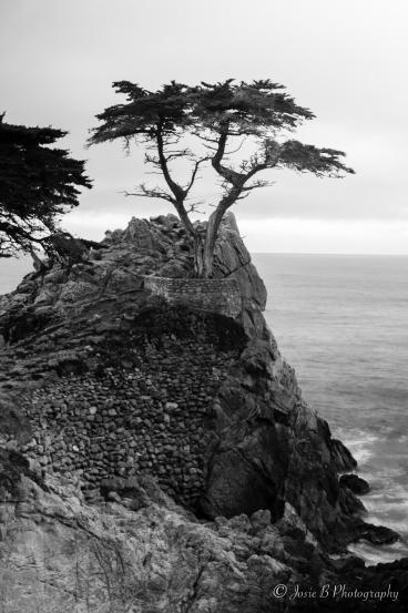 Week 2 - Lone Cypress