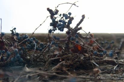 Week 4 - Below the Berries