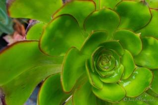Week 5 - Succulent Delight